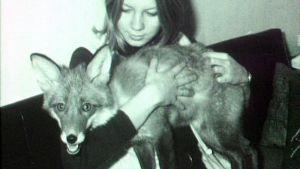 Ennen eläinsuojelulain muutosta saattoi ketunpojastakin tulla lemmikki