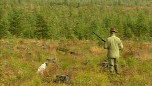 Pentti Aaltonen muistelee 1960-luvun metsästysreissujaan.