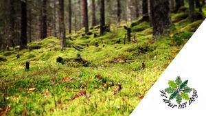 Mossa i skogen och i högra nedre hörnet en logo för kampanjen Vi drar till skogs.
