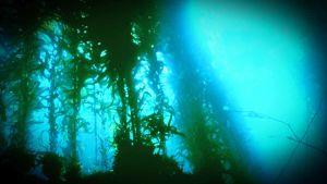 vedenalainen näkymä, vesikasveja