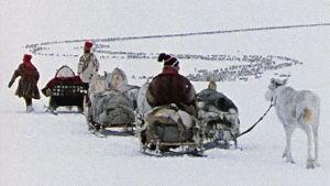 Paimentolaissaamelaisia Norjassa (1970-luku)