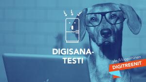 Silmälasipäinen koira katsoo tietokonetta. Kuvassa tekstit Digisanatesti, Digitreenit ja yle.fi/oppiminen.