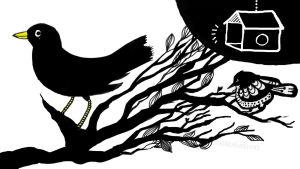 Kissankehto: Mustarastas