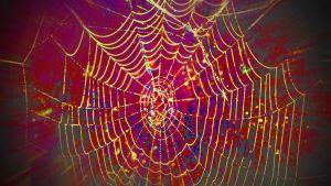 Hämähäkinverkko