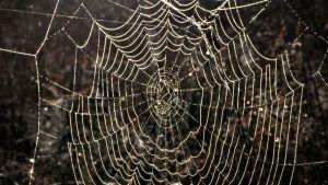Hämähäkin seitti auringonvalossa