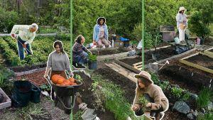 Yle hakee harrastajia puutarha-aiheiseen ohjelmakokonaisuuteen.