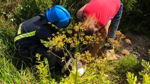 Två personer omringade av gräs och växtlighet hukar sig kring en vit säck.