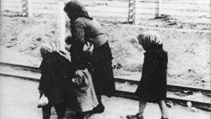 På väg till gaskammaren i Auschwitz i maj 1944.