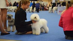 Hund på World Dog Show 2014.