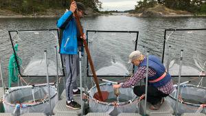 Timo Tamminen och Jukka Seppälä häller humus. Experiment