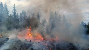 Metsän kulotus menossa Suomussalmella.