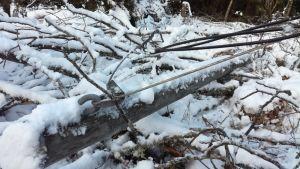 En elstolpe som fallit i en skog.