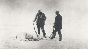 Fraenkel och Strindberg med den första isbjörn de sköt utanför Svalbard.