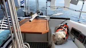 Tuulihaukka veneessä