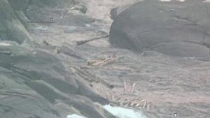 Sjöbevakningens flygfoto av stockar på stränder och i havet.