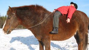 Maija Vesterinen pikkutyttönä pötköttää hevosen selässä.
