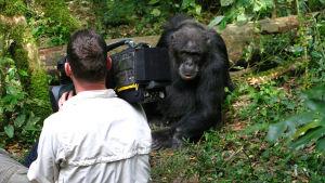 Bild från dokumentären The secret of the apes.