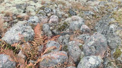 Runda mosstäckta stenar.