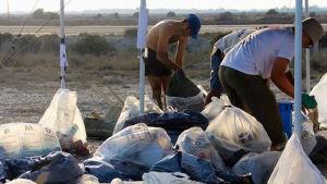 Greenpeaceaktivister samlar plastskräp på en strand.