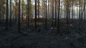 Backgränd FBK:s brandbil syns bakom uppbränd skog i Pyhäranta.