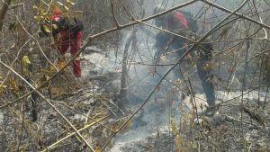 Brandmän kämpar mot en skogsbrand i Amazonas i östra Bolivia