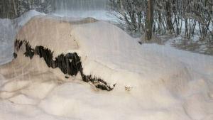 Rekordymnigt snöfall i Sastmola norr om Björneborg 8.1.2016.