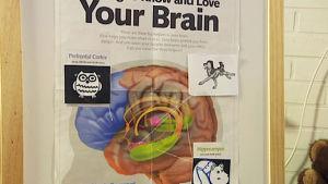 Aivokuva päiväkodin stressinhallinta-ohjelman avuksi
