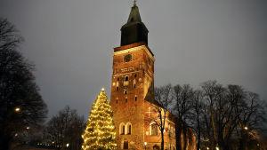 Vaakakuva Turun tuomiokirkon kuusesta joulukuussa 2020.