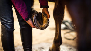 tyttö katsoo hevosen kavioita