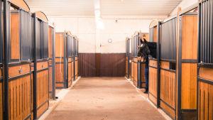 Hevonen haukottelee karsinasta, tallikäytävä