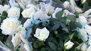 Bild på vita rosor i kruka.