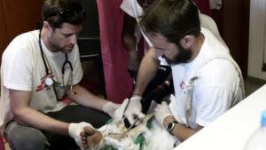Sjukvårdpersonal tar hand om skadade människor.