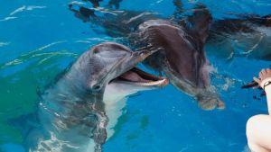 Delfinerna får Särkänniemi i sin nya omgivning