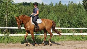 En häst skrittar med ryttaren på ryggen.