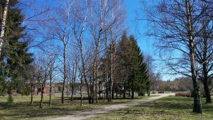 En gång som kantas av träd i en park.