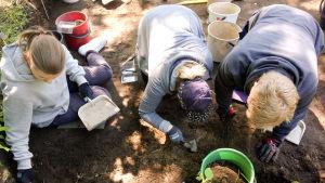 Kolme opiskelijaa ylhäältä päin polvillaan maassa kaivamassa arkeologisilla kaivauksilla Vantaan Jokinimessä