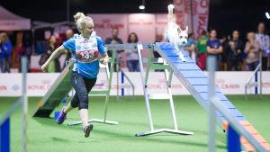 Kaisa Ylä-Tuuhonen och kromfohrländern Hikka är finska mästare 2016 i mediklassen i agility.