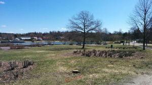 Träd och gräsmatta i en park en solig vårdag i maj.