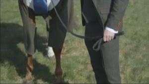 Uutisvideot: Ratsuhevoselle räätälöitiin tweedpuku Britanniassa