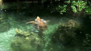 Uutisvideot: Floridan kilpikonna