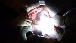 Uutisvideot: Lucha-norsu hammaslääkärissä