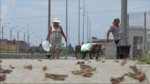Uutisvideot: Heinäsirkat valtasivat Sotshin
