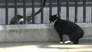 Uutisvideot: Poliittinen kissatappelu Britanniassa