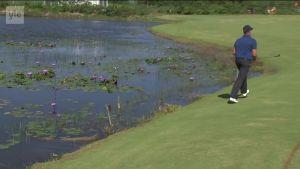 Rion olympialaiset: Golfari Stenson testasi lyöntiään Rion kaimaaniin