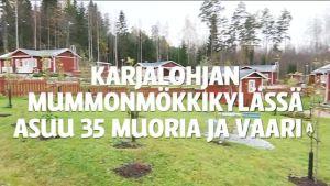 Uutisvideot: Mummonmökkikylä