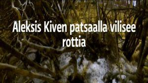 Yle Helsinki: Aleksis Kiven patsaalla vilisee rottia