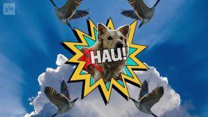 Uutisvideot: Kelpaisiko Valtti-koiran apu sinulle?
