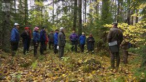 Yle Uutiset Pirkanmaa: Metsänomistajia koulutetaan metsien monimuotoisuuden säästämiseen