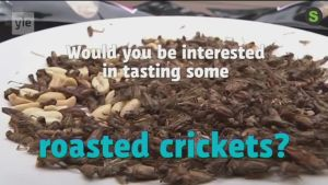 "Uutisvideot: ""Gold rush"" for cricket snacks startup as Finland legalises edible insects"