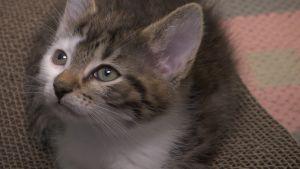 Pentunsa menettänyt kissaemo otti orvot kissanpennut huomaansa eläinhoitolassa – kahdesta tragediasta syntyi yksi onnellinen loppu
